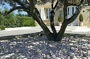 Patio Pebble For Basins For Exterior Flooring Rounded