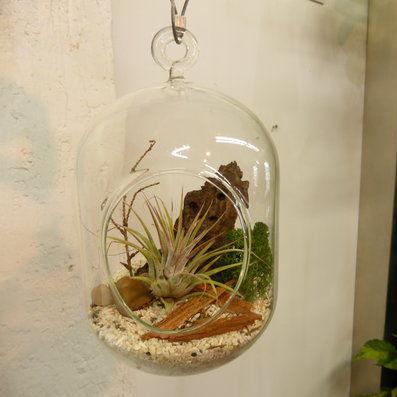 Contemporary Vase Glass Hanging Terrarium By Nature