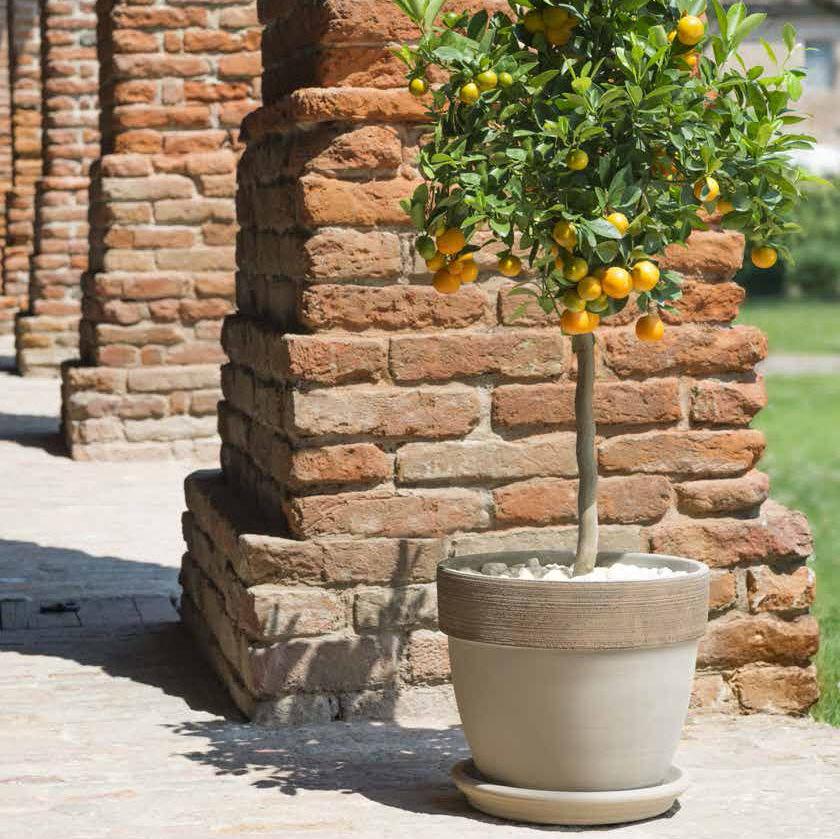 Terracotta Garden Pot / Round   VULCANO GRAFFIATO : PALLADIO