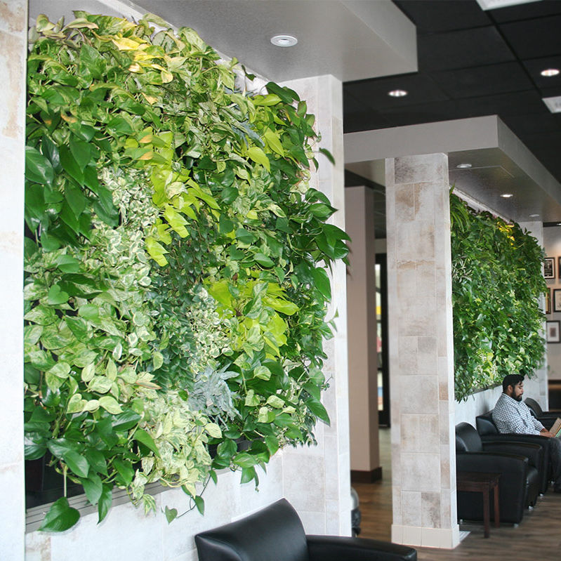 Green Wall With Live Plants Natural Indoor