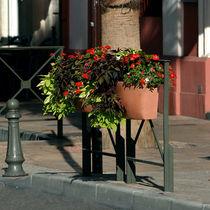 Polyethylene planter / contemporary / for public spaces