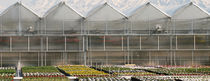 Steel frame greenhouse