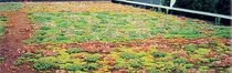 extensive green roof system  ECOVEGETAL / TOITURES VEGETALISEES