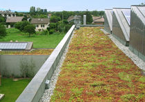 extensive green roof system SUCCULIS ECOVEGETAL / TOITURES VEGETALISEES