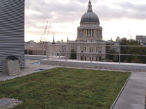 extensive green roof system (pitched roof) NATUREMAT®  Green Roof