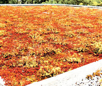 green roof waterproofing membrane CITYFLOR®  AXTER