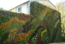 outdoor green wall  CANEVAFLOR