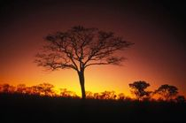 personalized wallpaper NAMIBIA NIGHT SKY Juicywalls GbR