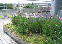 semi-intensive green roof system LAVANDULIS ECOVEGETAL / TOITURES VEGETALISEES
