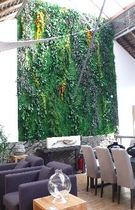 stabilized plant green wall  LOTUS