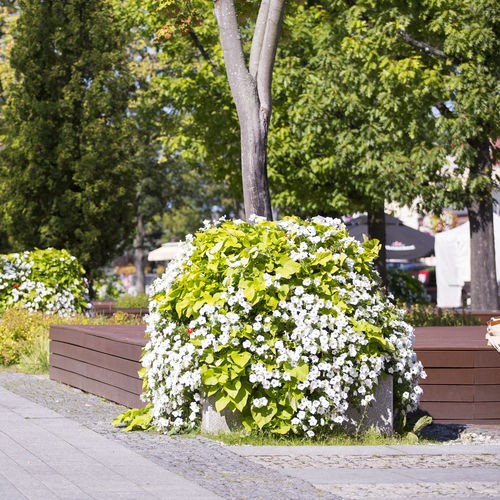 galvanized steel planter / round / contemporary / for public spaces