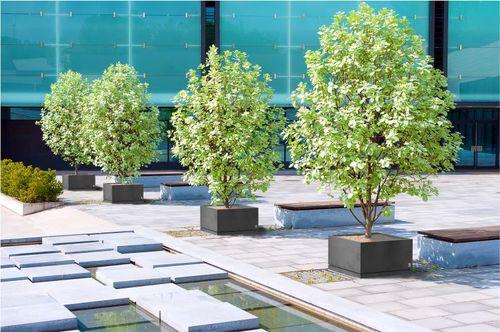Concrete planter / rectangular / square / contemporary REGULAR WITH SAUCER Modern Line
