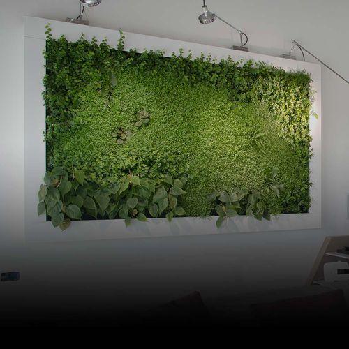 preserved living frame / moss / foliage / natural