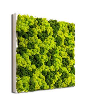 preserved living frame / moss / natural / indoor