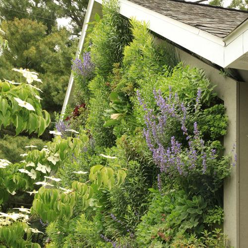 vertical garden with live plants / indoor / outdoor