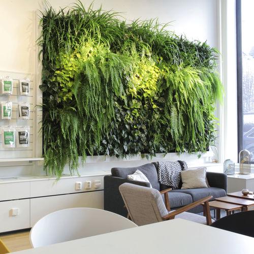 vertical garden with live plants / indoor