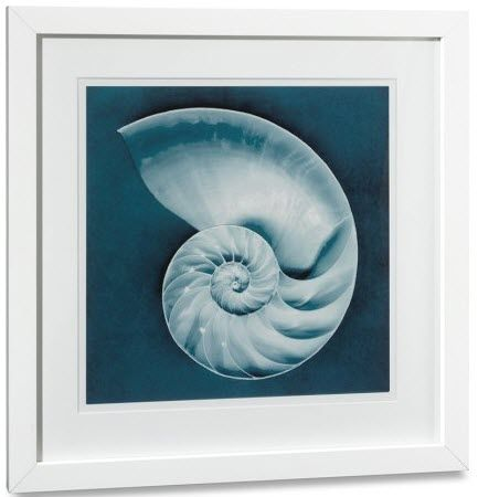 decorative painting SLICED NAUTILUS Williams Sonoma Home