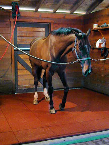 rubber flooring for stable EQUI-GOMMA  POLIGOMMA SRL
