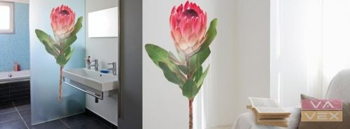 wall sticker (nature: flower) COUS COUS PROTEA Vavex 1990
