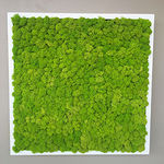 preserved green wall / modular-panel / natural / indoor