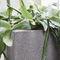 plastic planter / square / contemporary