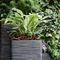 plastic garden pot / square