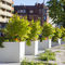 concrete planter / square / contemporary / for public spaces