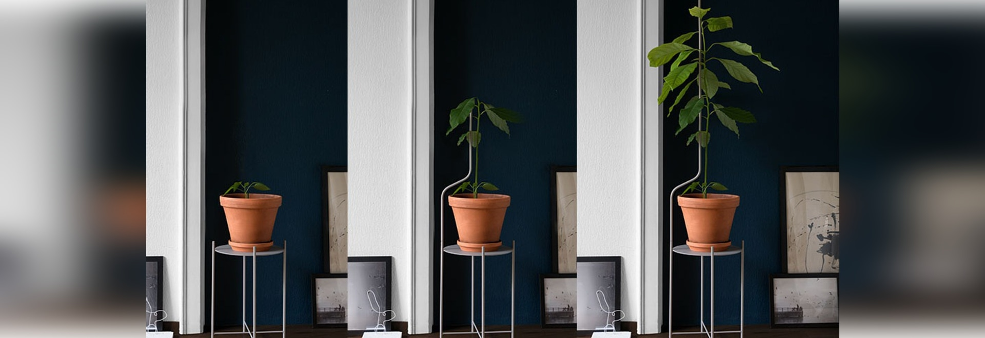 This Plant Stand Is Designed To Support Plants As They Grow