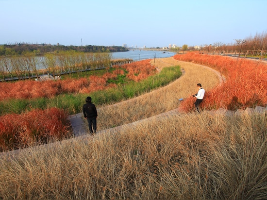"""Terraces of plants in Yanweizhou Park """"control floods in an ecological way"""""""
