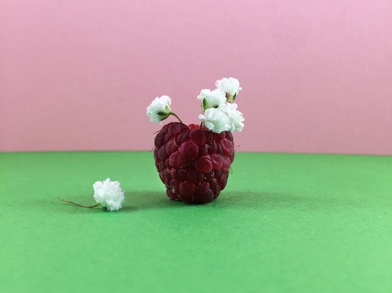 the tiny opening of a raspberry holds minuscule baby's breath flowers