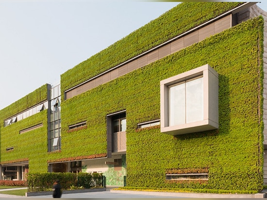 the south wall is a living wall plane composed of a metal trellis covered with vines