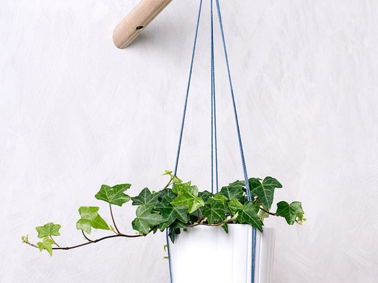 6 Ways To Include Indoor Vines In Your Interior