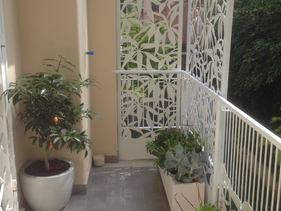 Schefflera terrace screens
