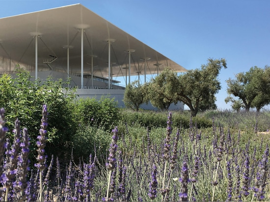 Lavender and olive trees are the main mediterranean vegetation on the car park roof. © H. Pangalou and Associates Landscape Architects