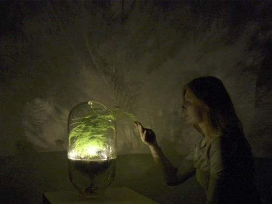 This Living Light is powered by a houseplant