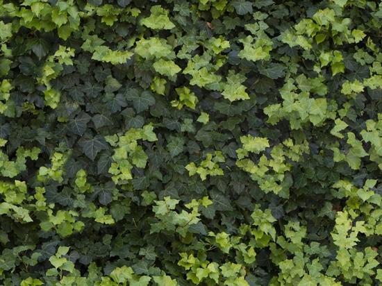 Greentech spirit Natural inspiration, technological excellence