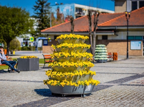 Pansies in pots, daisies in containers, in other words, spring decorations for your city
