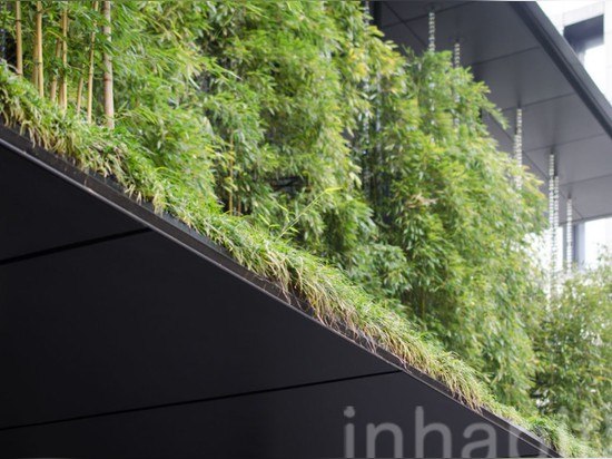 A lush bamboo forest thrives atop the Ekouin Buddhist Temple in Tokyo