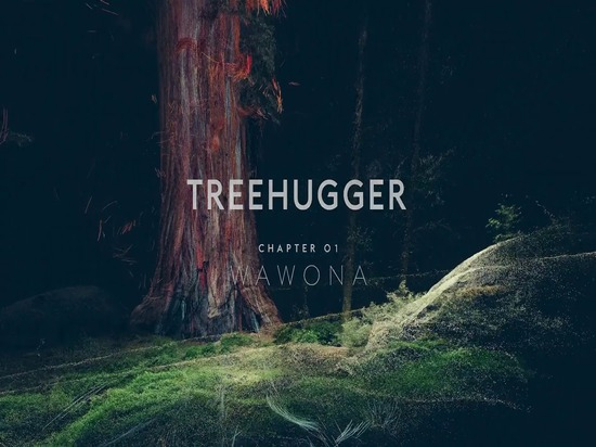 Treehugger Chapter 01: WAWONA Teaser from Marshmallow Laser Feast