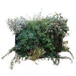 quadro vivo estabilizado / de folhagem densa / natural / para ambiente interno