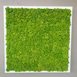 parede verde estabilizada / em painel modular / natural / para ambiente interno