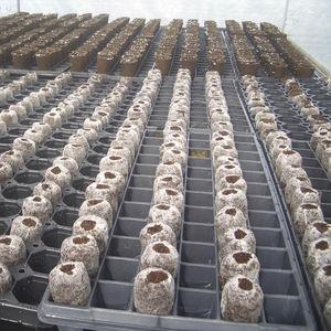 coconut fiber growing medium