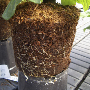 coconut fiber growing medium / loose / for flowers / for organic farming