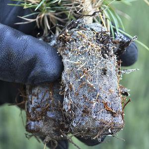 peat growing medium