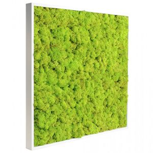 preserved living frame / natural / foliage / in lichen