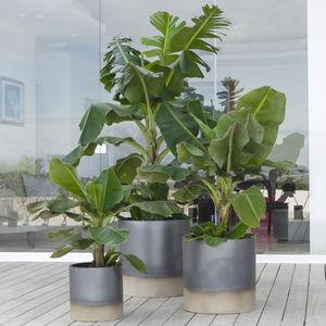 terracotta garden pot / round / home / commercial
