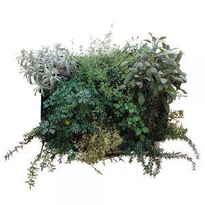 preserved living frame / foliage / natural / indoor
