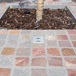 tree irrigation system