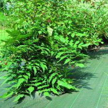 UV protection plastic mulch