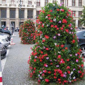 pyramids ornamental-plant